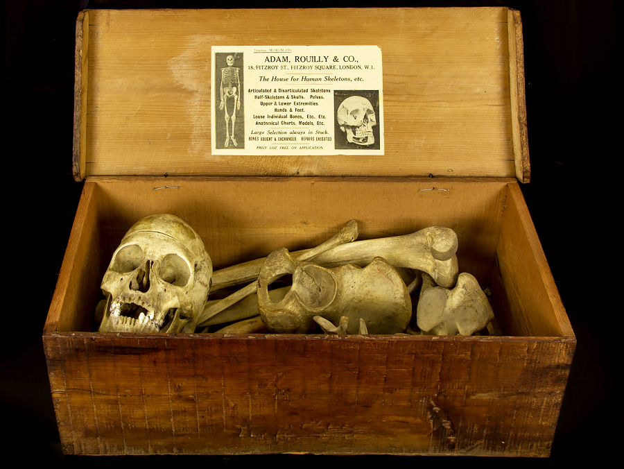 c1905 human skeleton in wooden case by adam rouilly & co london, Skeleton